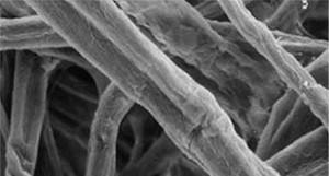 Cellulose image