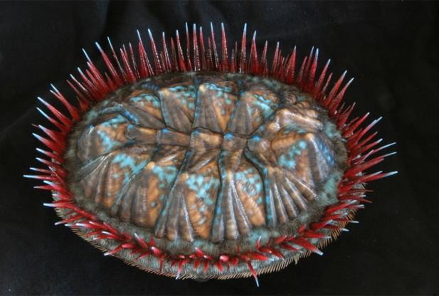 3D Printed Mollusk