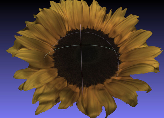 sunflower Scan by Fuel3D Scanner