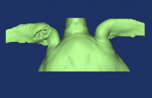 CT scans sea turtle