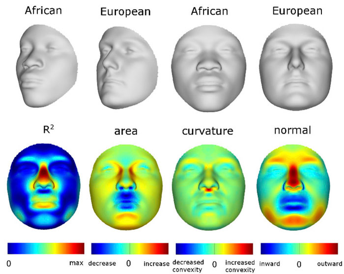 African European comparison