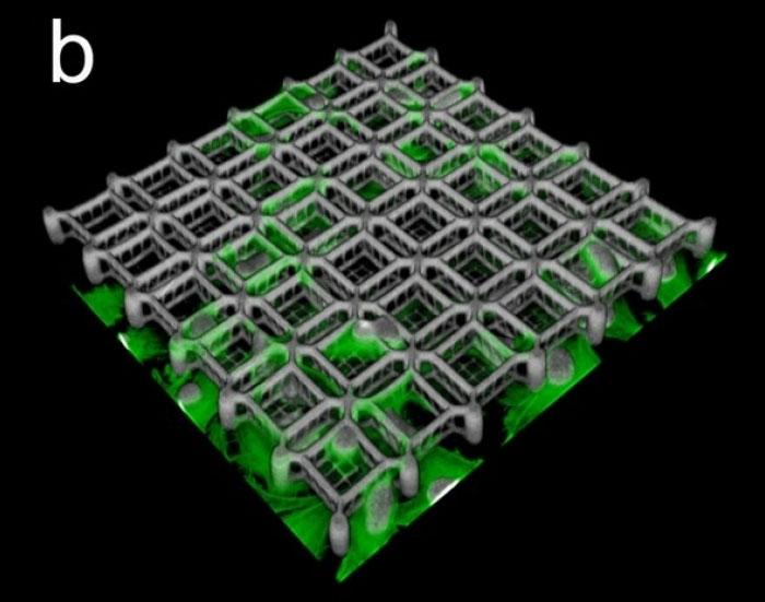 Cell culture scaffold