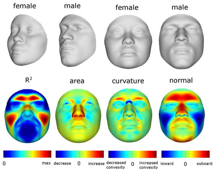 Male Female comparison