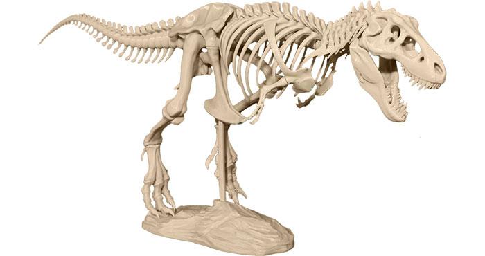 t-rex 3d printing model