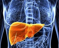 3D printed liver test results