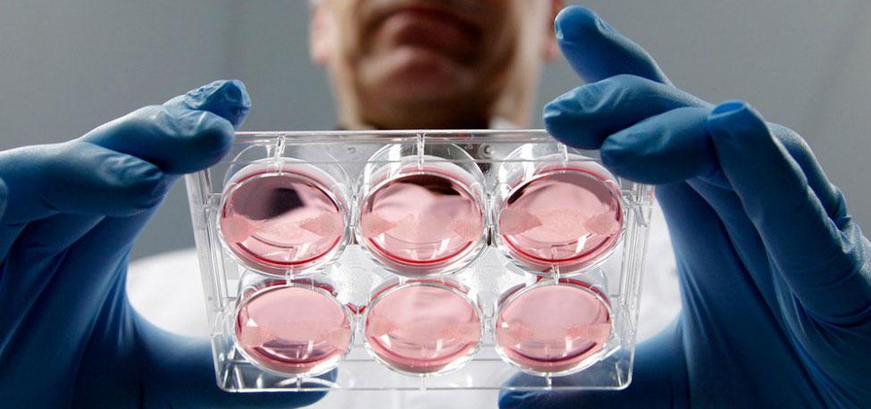 modern meadow 3d printing bioprinting