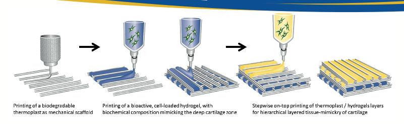 Hydrozones bioprinting