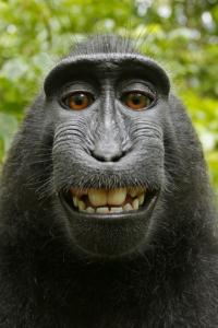 monkey selfie for 3D printed sculpture