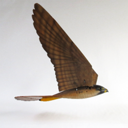 3D printed robird