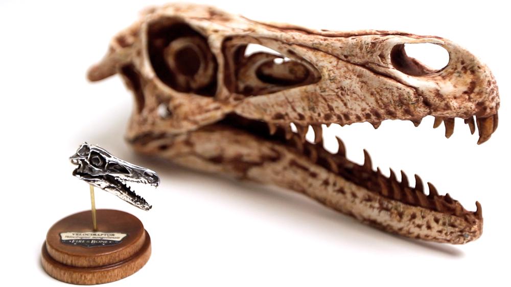 velociraptor skull by hannay1982 on DeviantArt |Velociraptor Skull Front