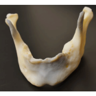 Proof X: Helping Surgeons, Patients, and Researchers with Innovative 3D Printing Services