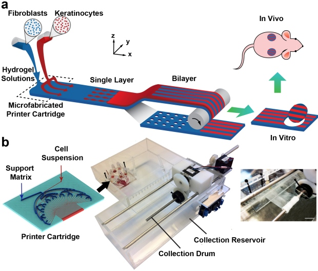 Dyson award PrintAlive bioprinter