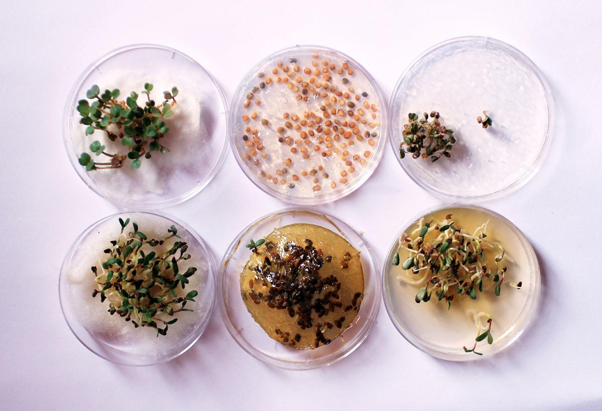 edible growth_test 3d printed foodish