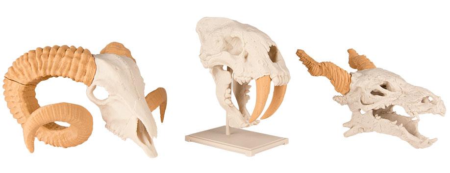 skulls makerbot 3d printing