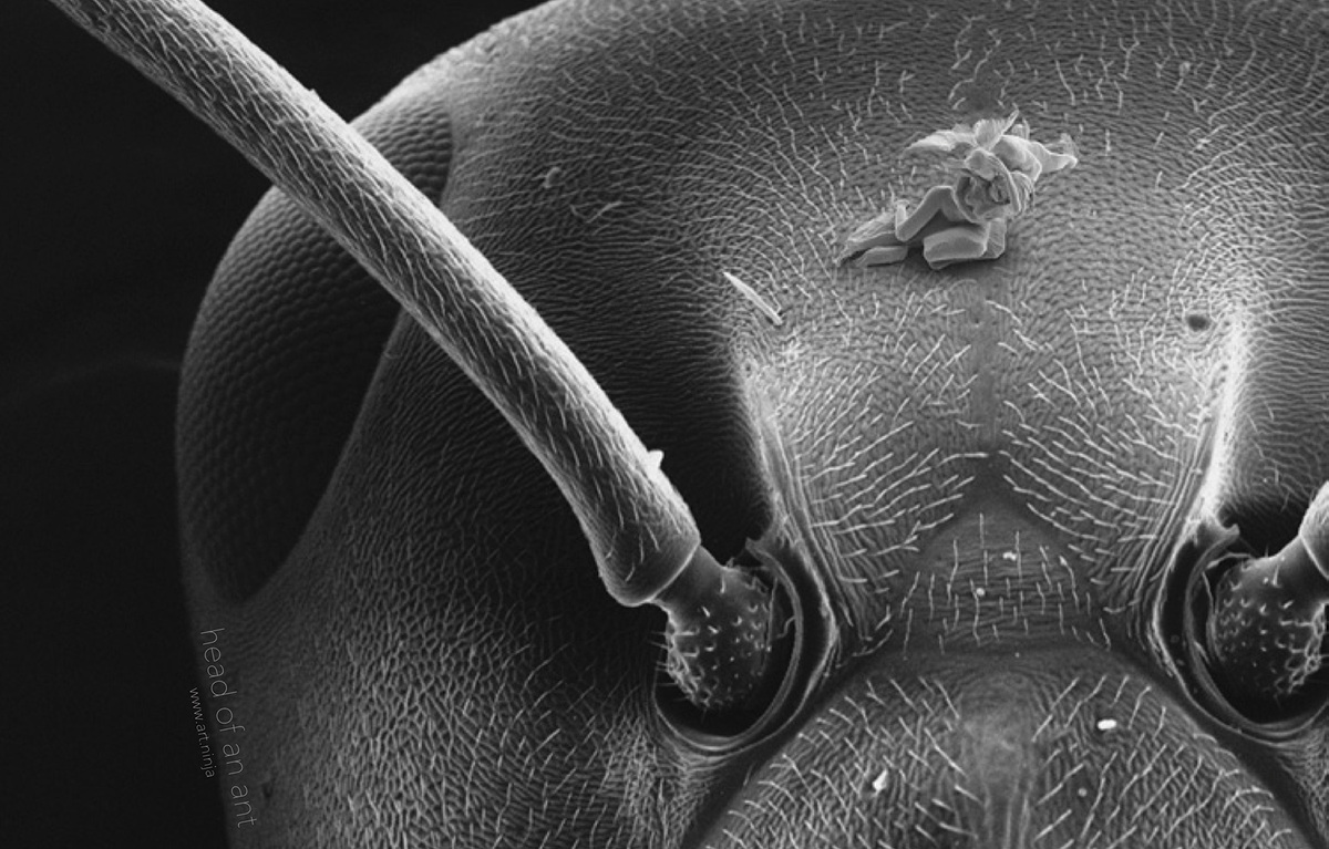 Cupid and Psyche jonty hurwitz 3D printed nanosculpture ant head