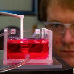 BioP3 3D bioprinting living tissue