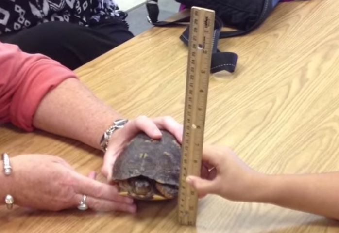 Students Measure turtle