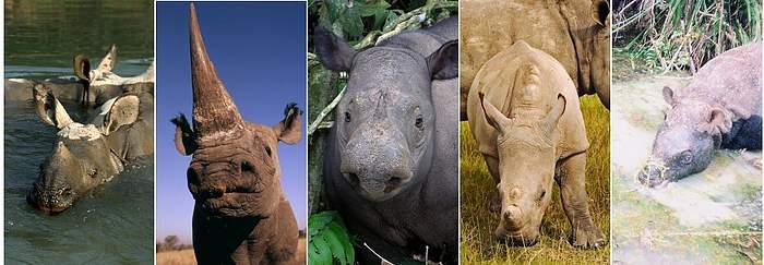 rhino montage