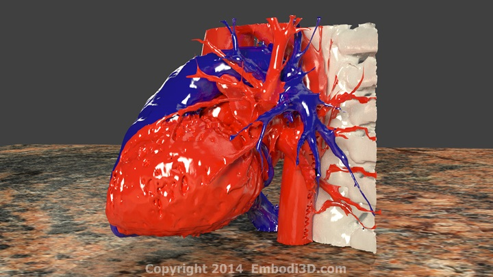 3d Heart Model Project For Kids 3d Heart Model Project For