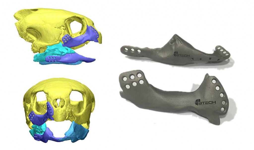 3D printed jaw implant for sea turtle