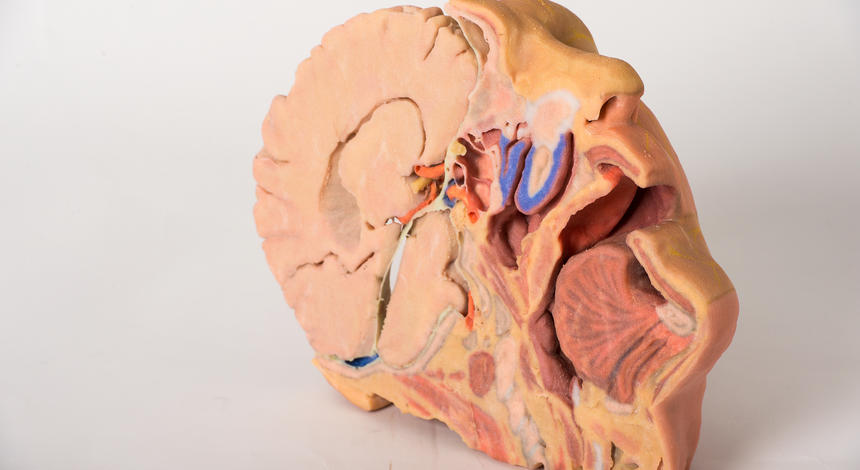 New 3d Printing Anatomy Kit Ready To Ship Ignorance Flees In Terror