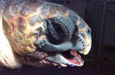 robo turtle 3d printed surgery sea turtle
