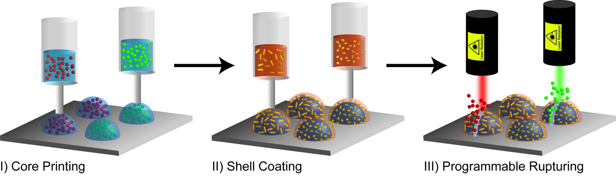bioprinting-hydrogels-with-timed-capsules.jpg