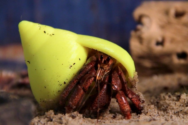 project shellter hermit crab 3d printing