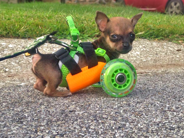 turboroo-3d-printing dog wheel chair
