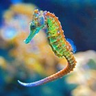 How Can 3D Printed Seahorse Tails Help Robotic Surgery?