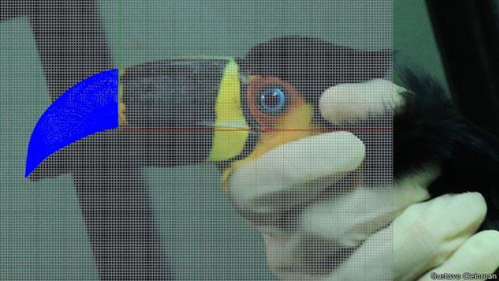 tieta 3D printed beak toucan 3D model