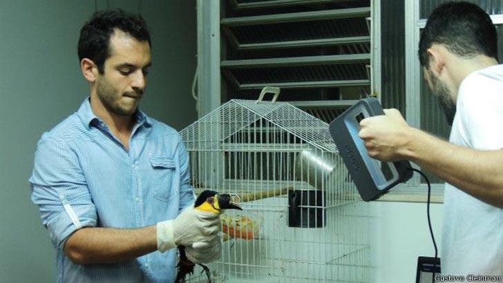 tieta 3D printed beak toucan 3D scan