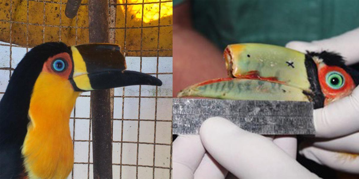 tieta and tupaul without 3D printed toucan beak