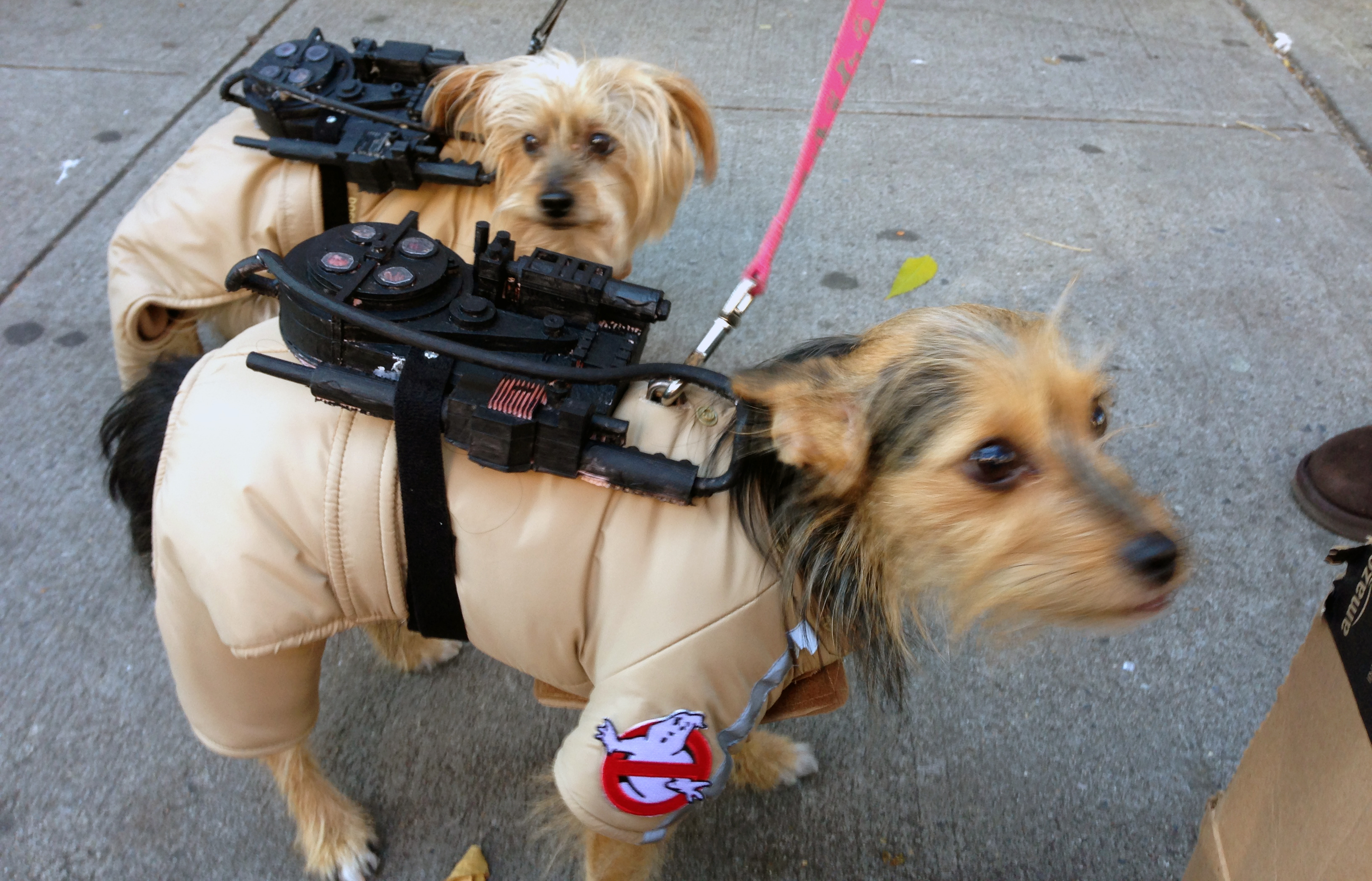 3D printed proton packs for Ryan George's dogs