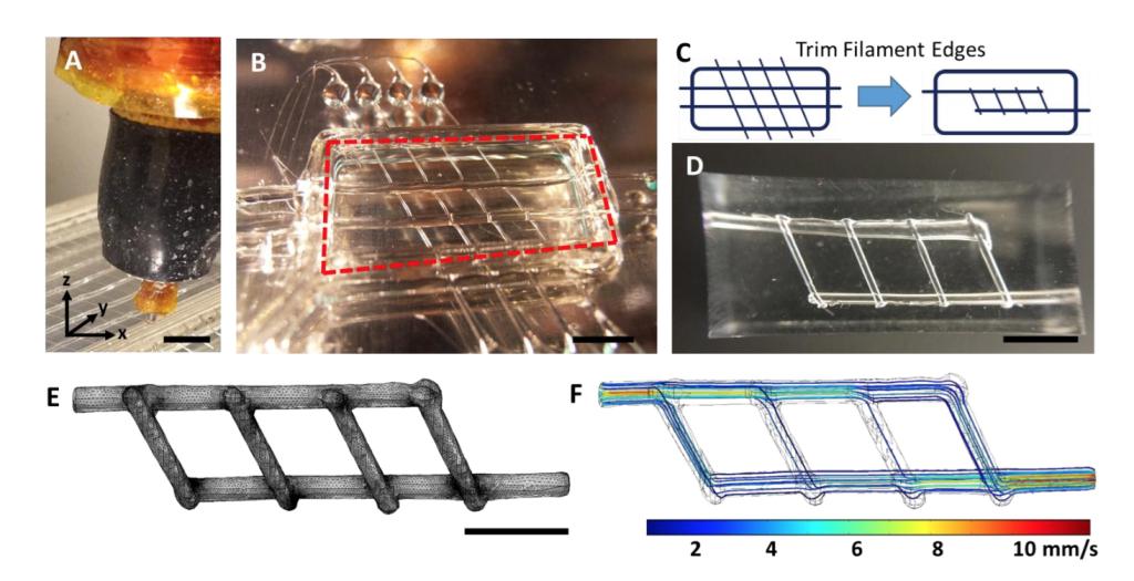 3D printed mold for blood vessel network from Rice University Jordan Miller