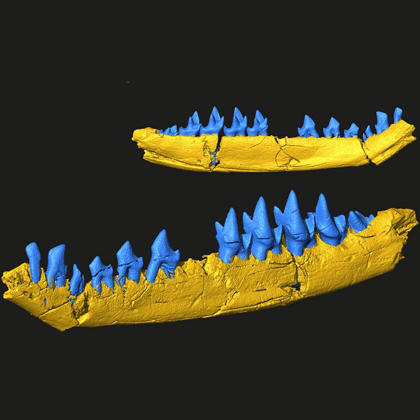 3d-model-of-fossil for 3D printing
