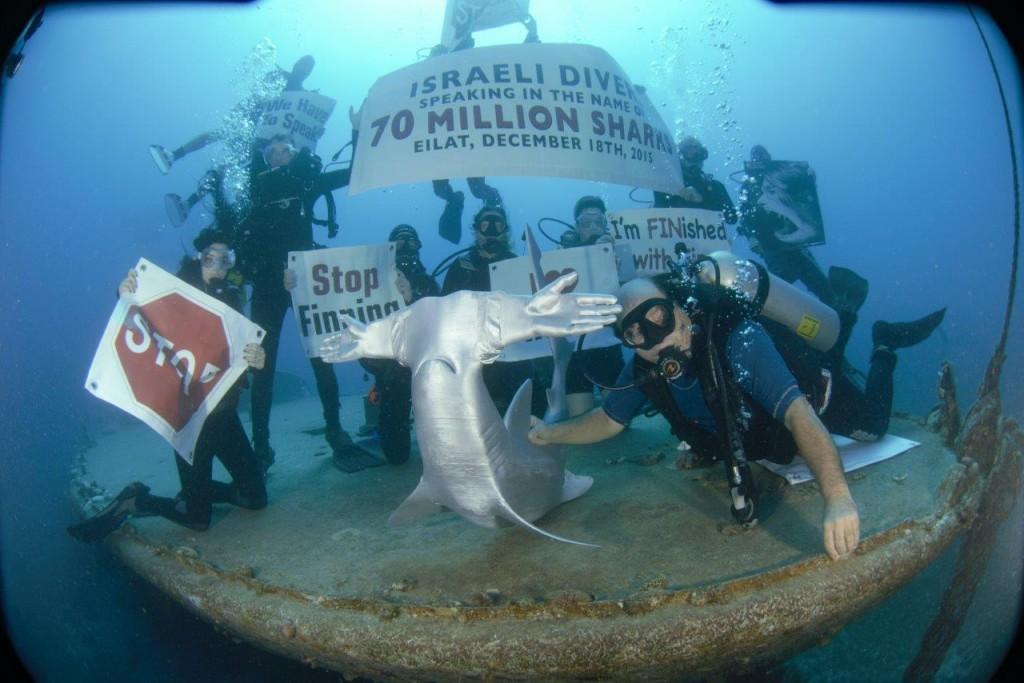 Massivit Shark2