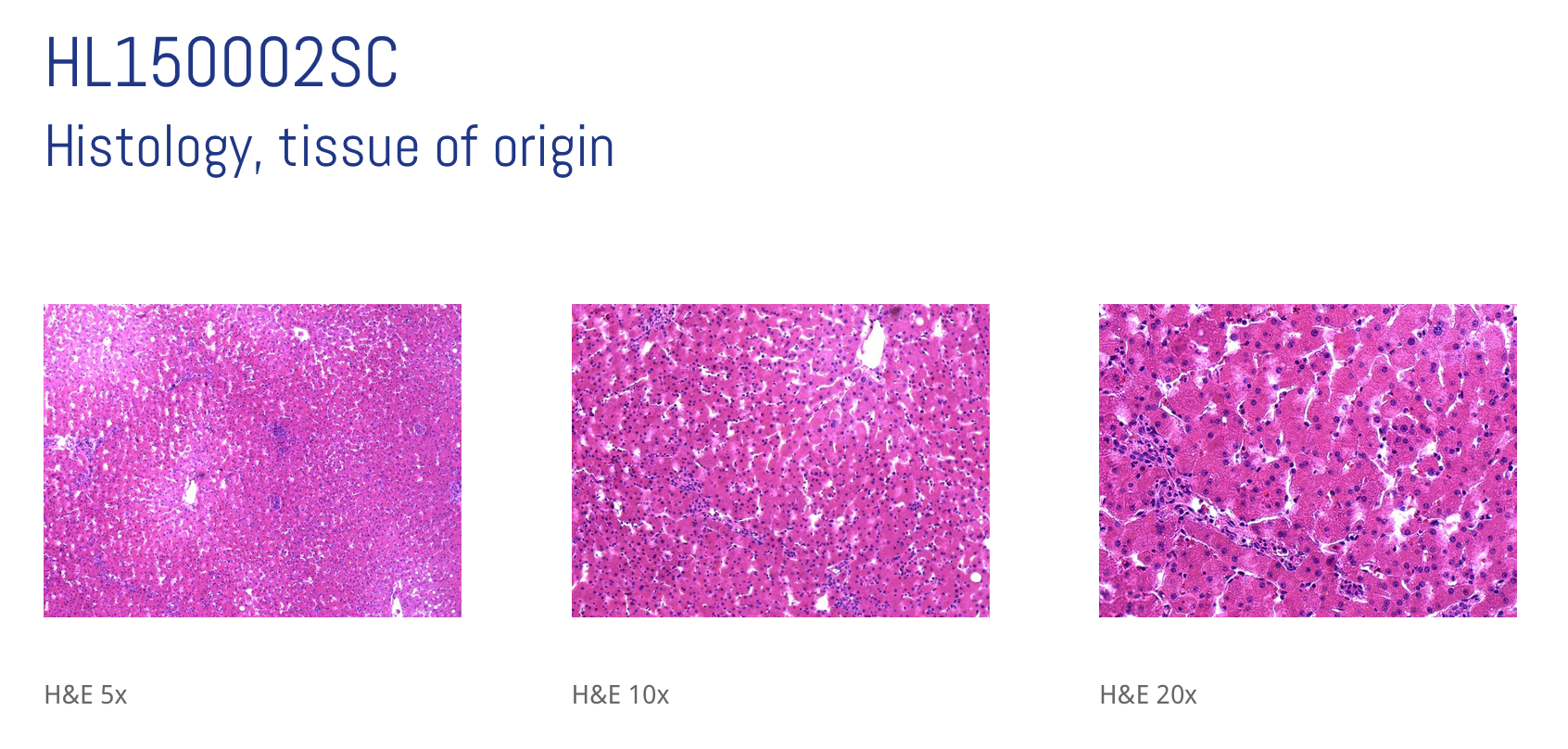 liver cells offered by samsara sciences for 3D bioprinting