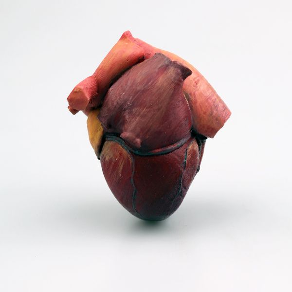3D printable anatomical heart model