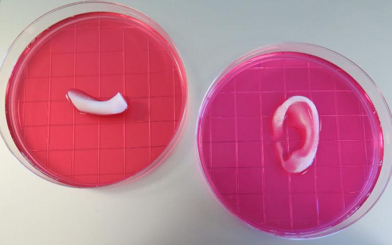 bioprint2