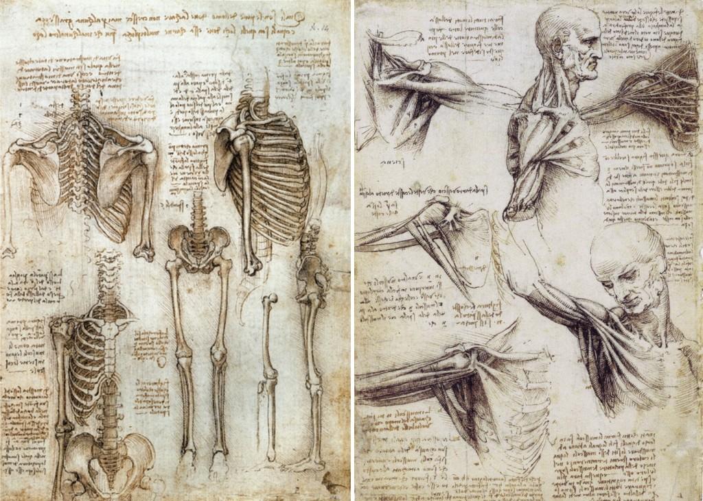 da vinci's anatomy drawings
