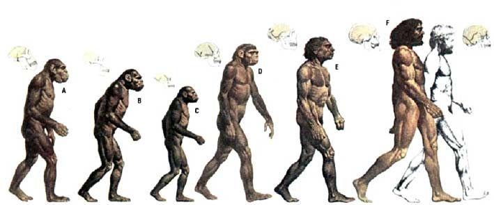 скачать игру Evolution Of Species - фото 2