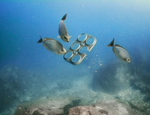Brewery Creates 3Dp Solution to Save Marine Life