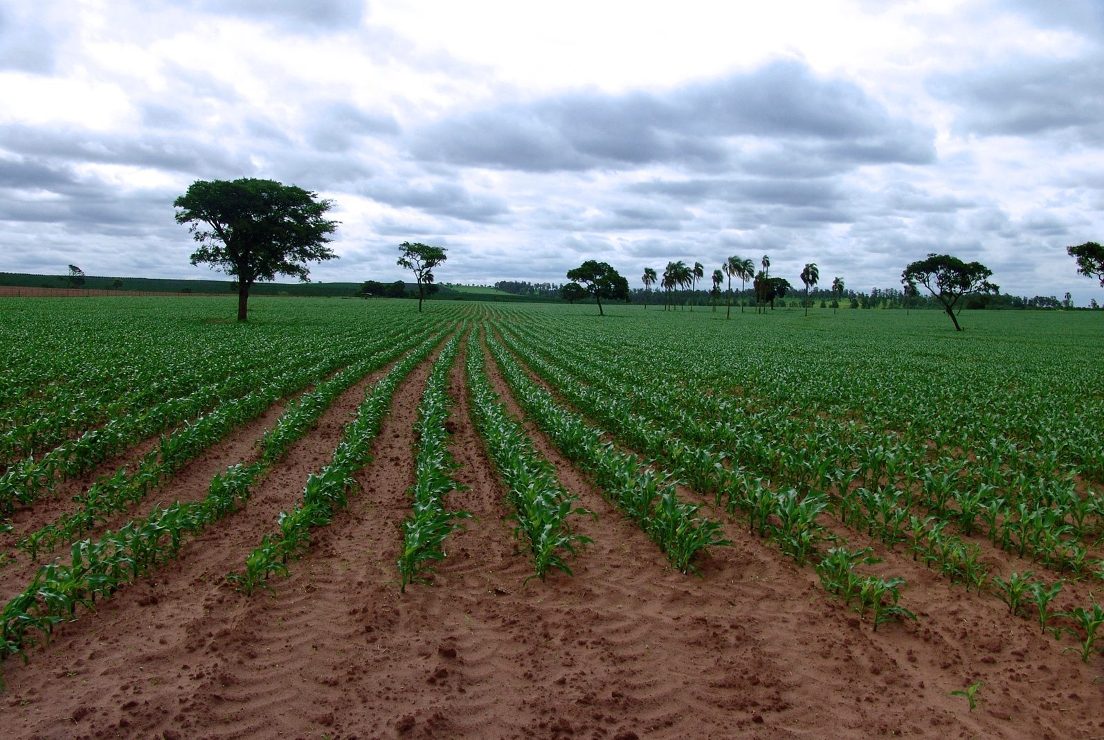 Fotos de granjas agricolas 38
