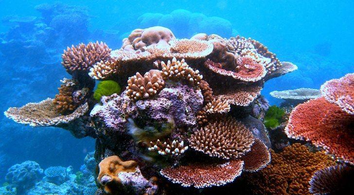 Image result for  3D design great barrier reefs