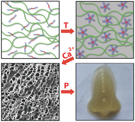 3D printed stem cells, the basis of bone and cartilage