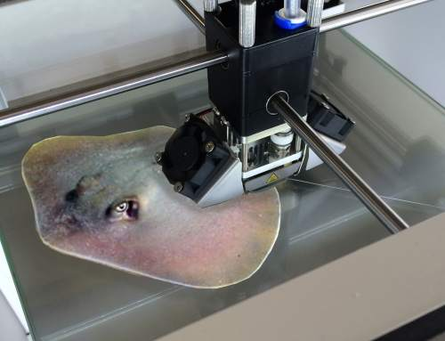 3D Printed Living, Moving Stingray