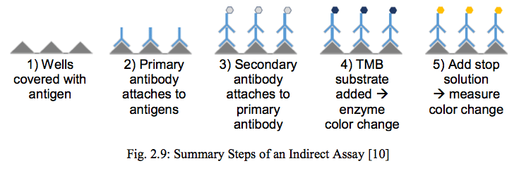 Summary Steps of an Indirect Assay (image courtesy Maria Bauer/UCI)