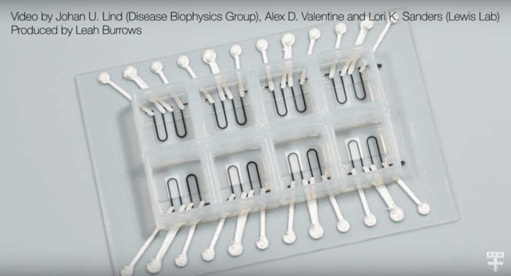 The finished structure of 3D printed hearts on chips. Screenshot via: Harvard John A. Paulson School of Engineering and Applied Sciences on Youtube