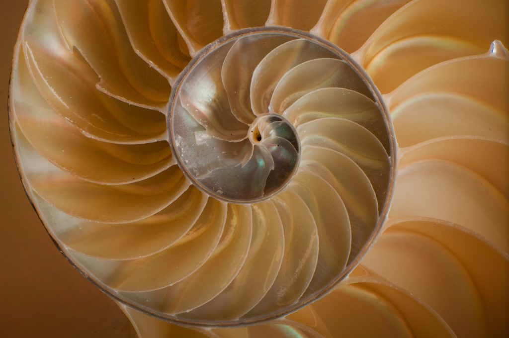 Chambers of a nautilus shell. Photo via: patcharles on Flickr